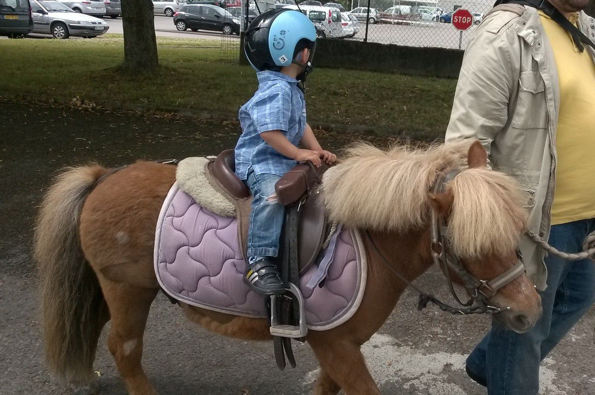 Poney et Equithérapie