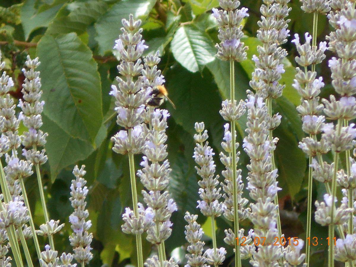 et pourtant je suis allergique aux abeilles !!!
