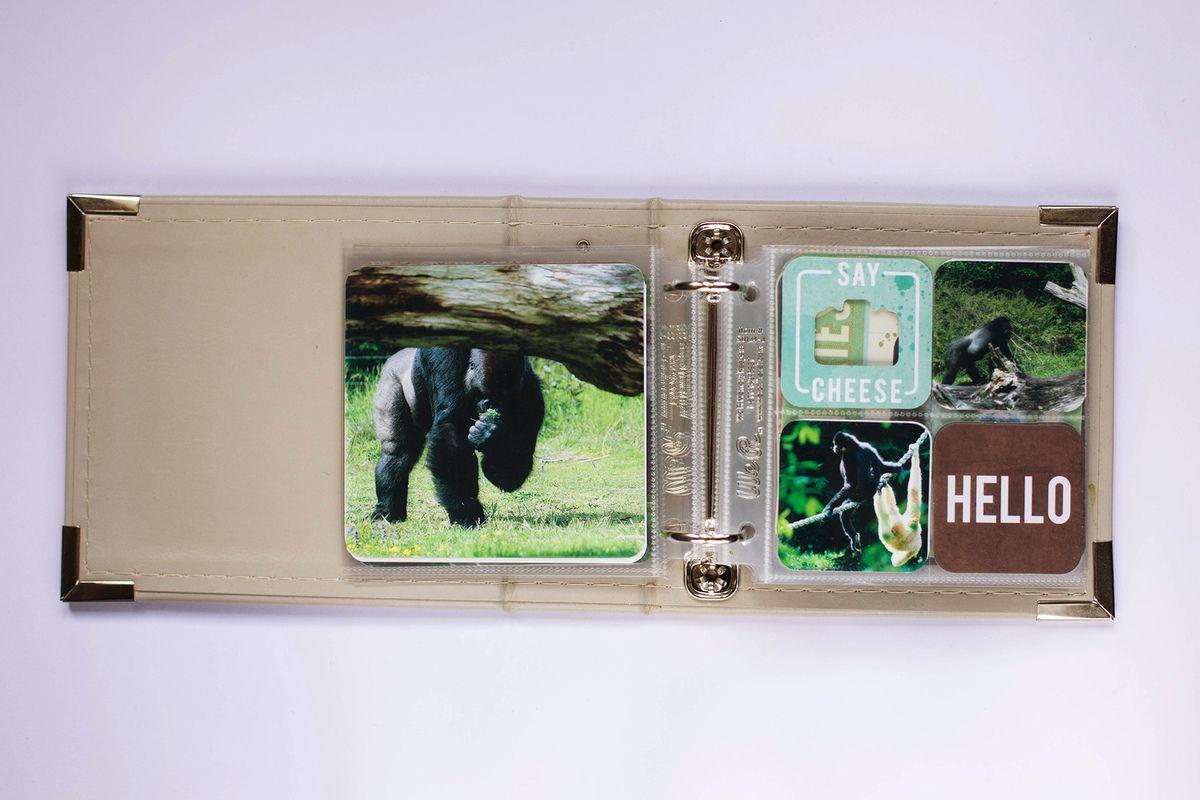 Semaine spéciale mini Insta : &quot&#x3B;le Zoo&quot&#x3B;