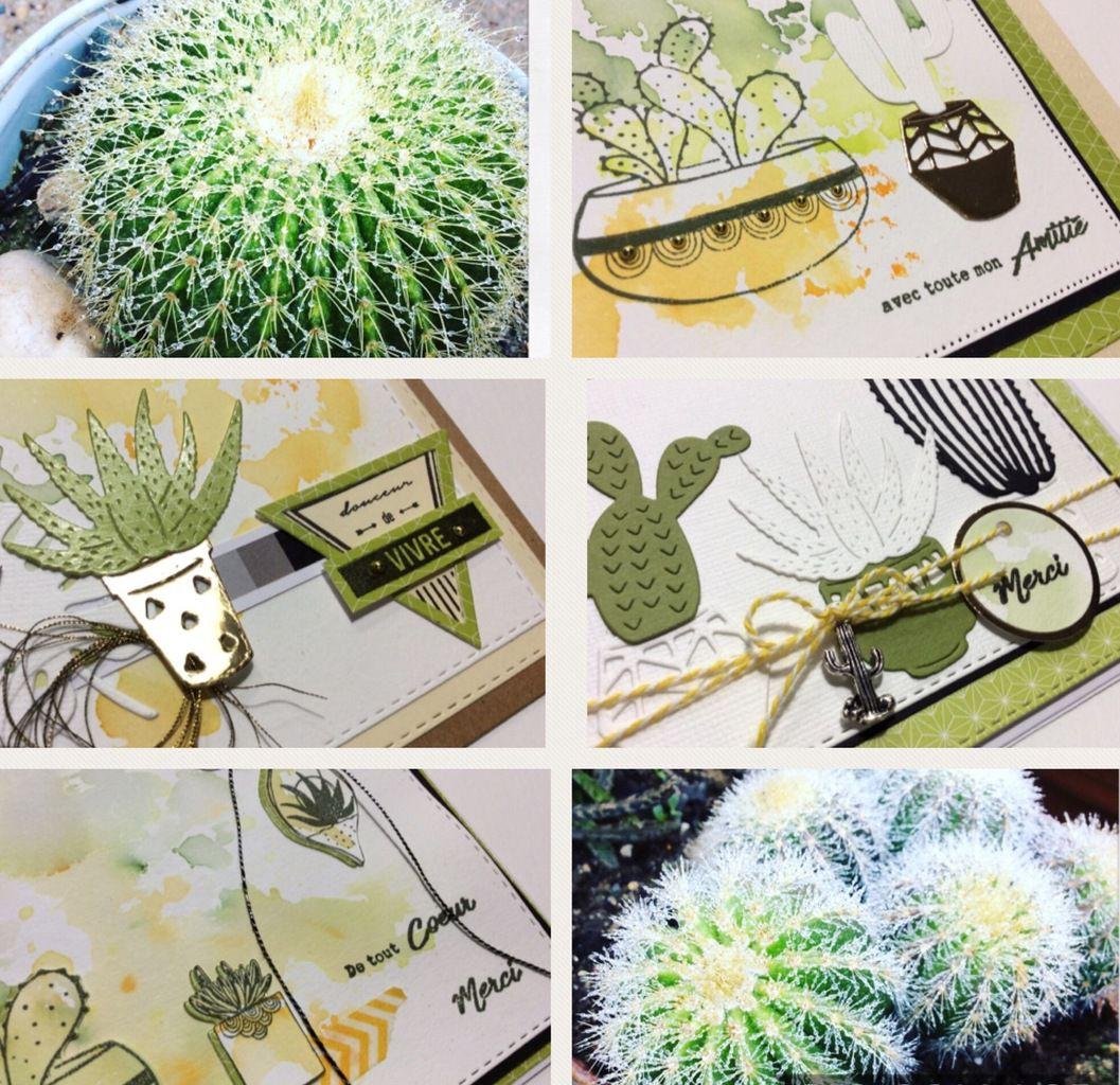 Nathaly :Quelques cartes ,ambiance verdure et cactus.