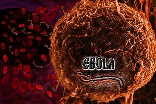 Ébola , l'épidémie qui a été prédite depuis longtemps  dans la Bible ?