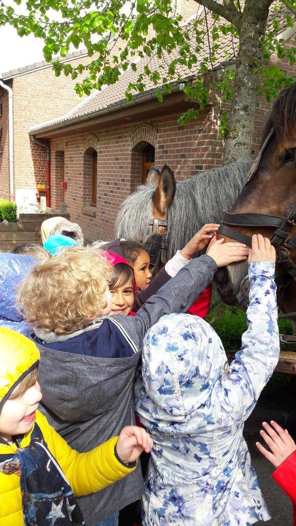 Sortie pédagogique des CP dans les Flandres