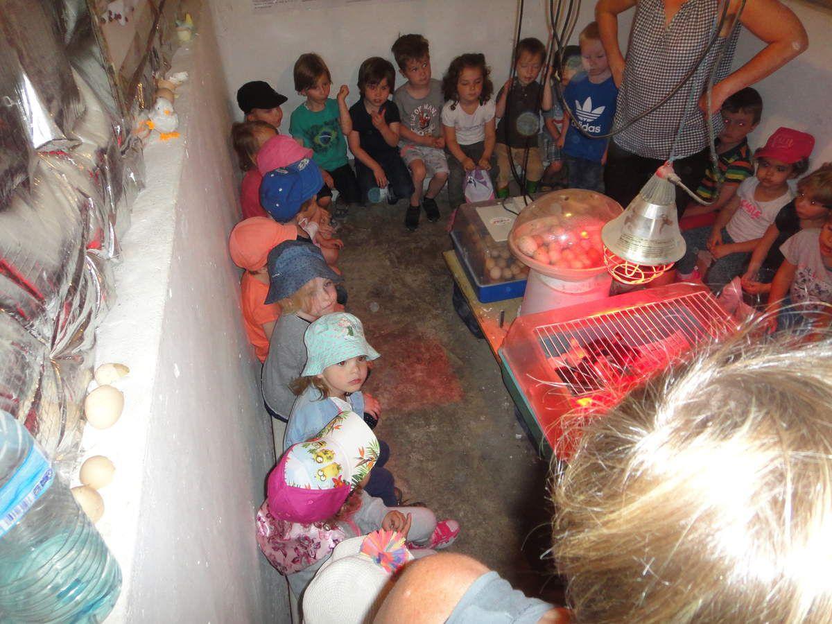 Sortie pédagogique de la classe de Mme Namysl à la ferme.