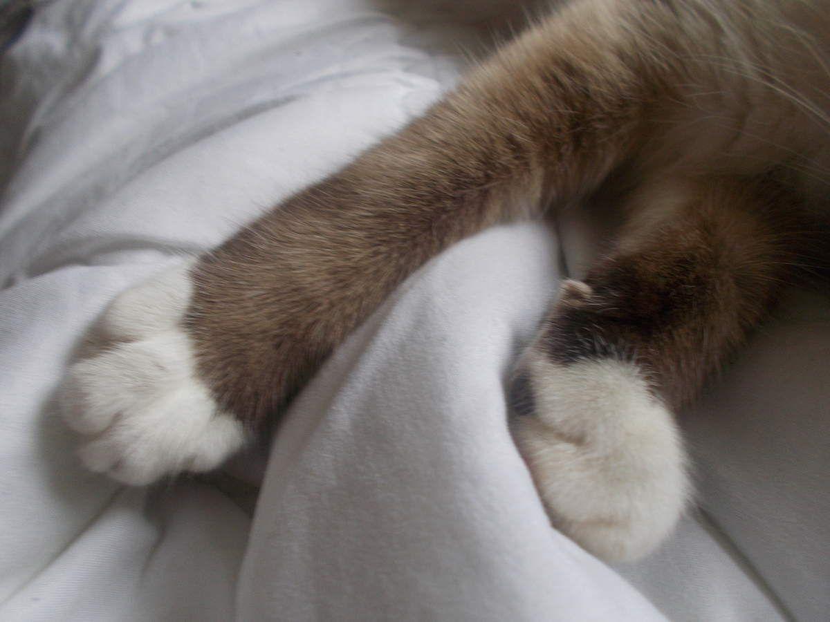 L'histoire de mon chat