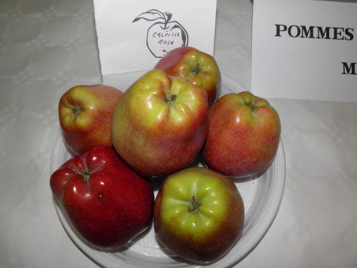 Différentes pommes à couteau