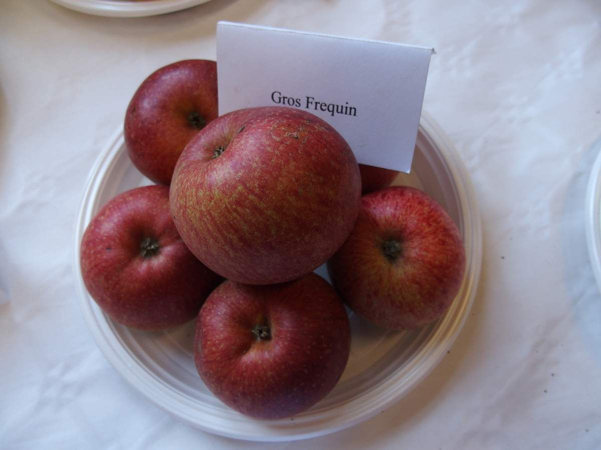 Différentes pommes à cidre