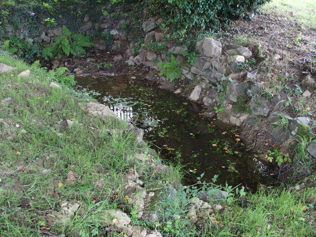 La source de Saint-Julien-des-Roncerais.