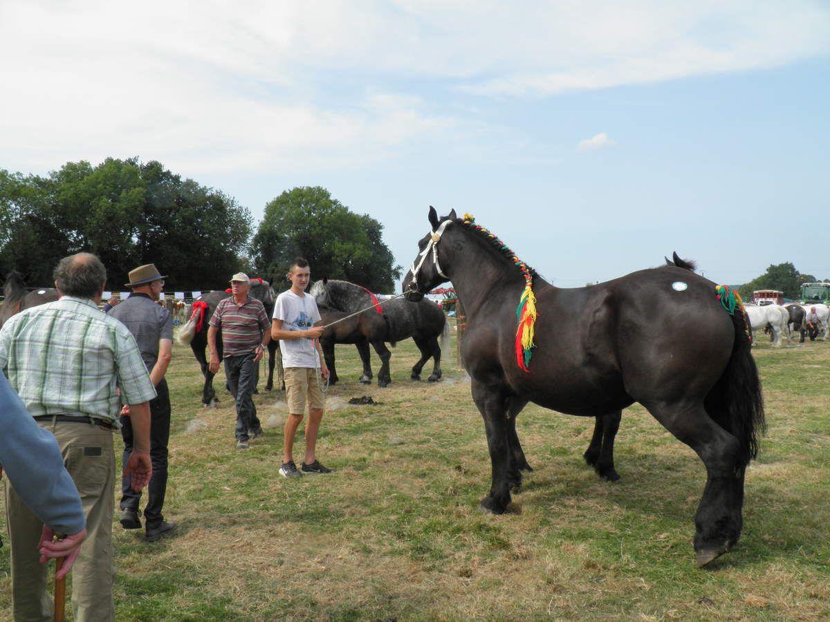 27 aout 2017 : foire-expo et comice à Pré-en-Pail-Saint-Samson