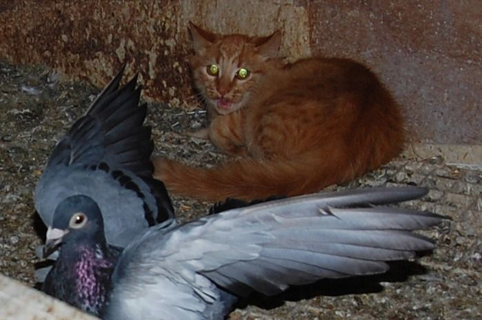 Miaou ! Chachou à peur !
