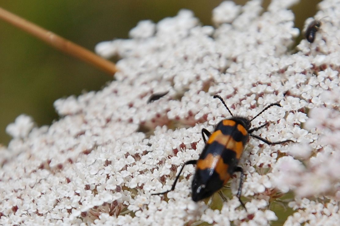 Un insecte sur une fleur blanche.