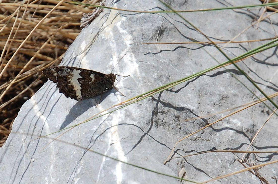 Un papillon.