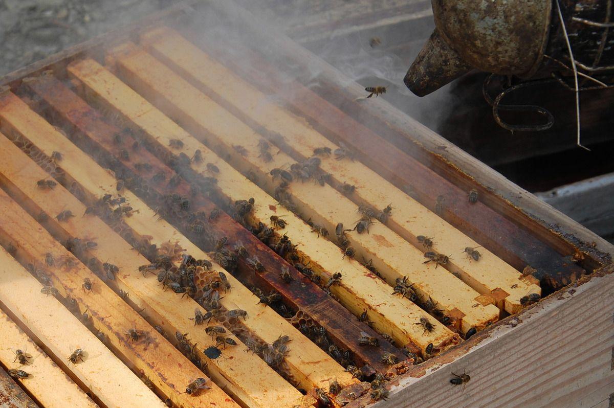 Le corps de ruche après l'enlèvement de la hausse.