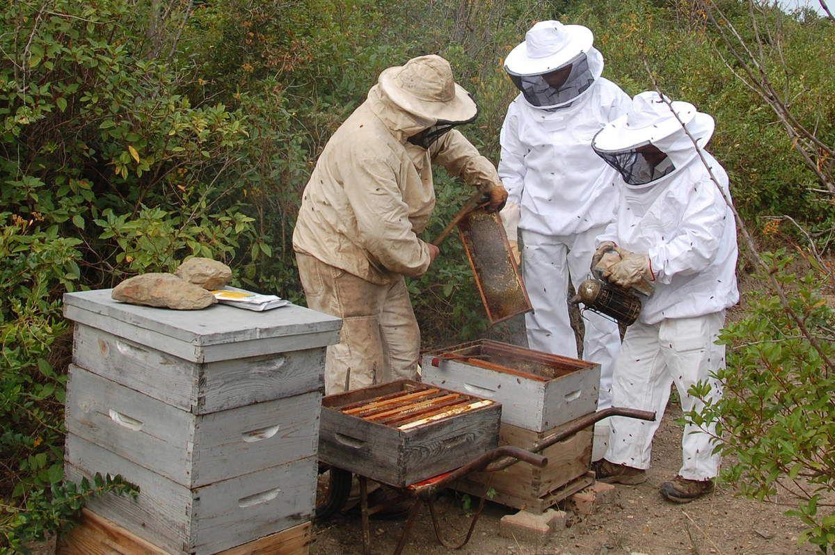 Les deux apiculteurs sont en plein boulot et le journaliste est au fond.