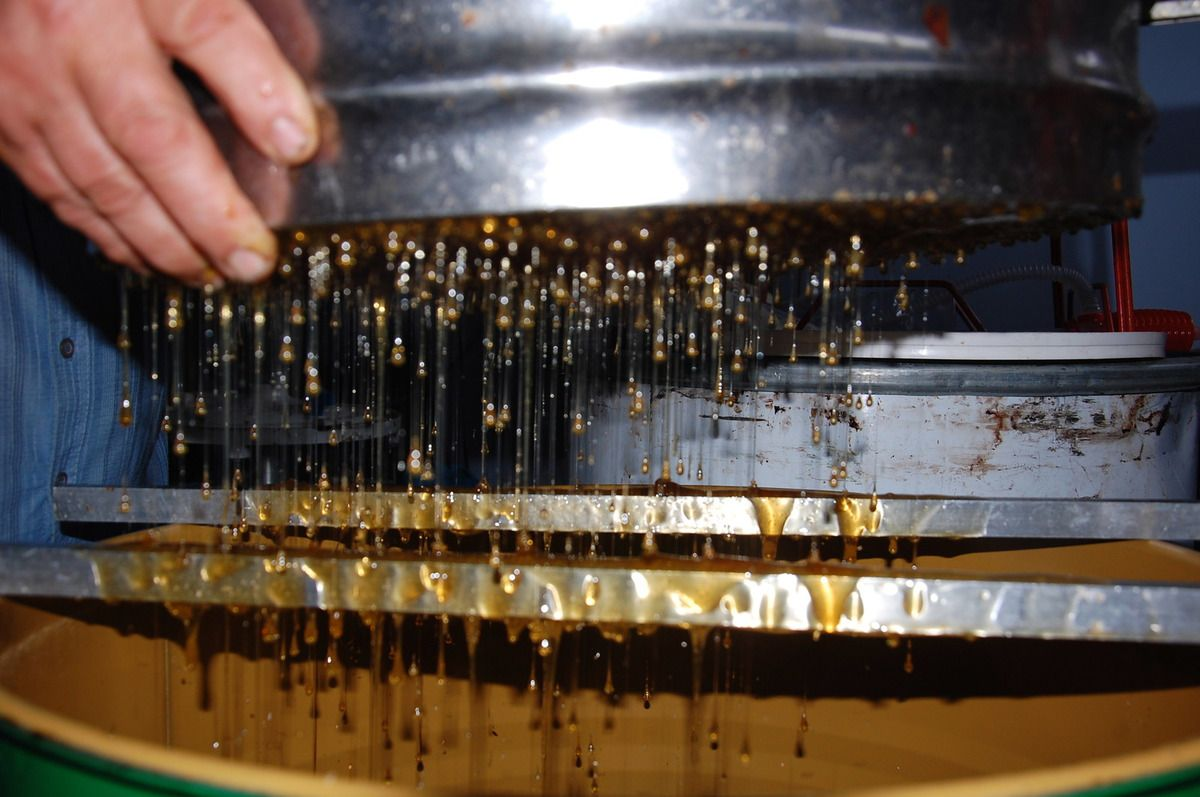 Une pluie de miel tombe.