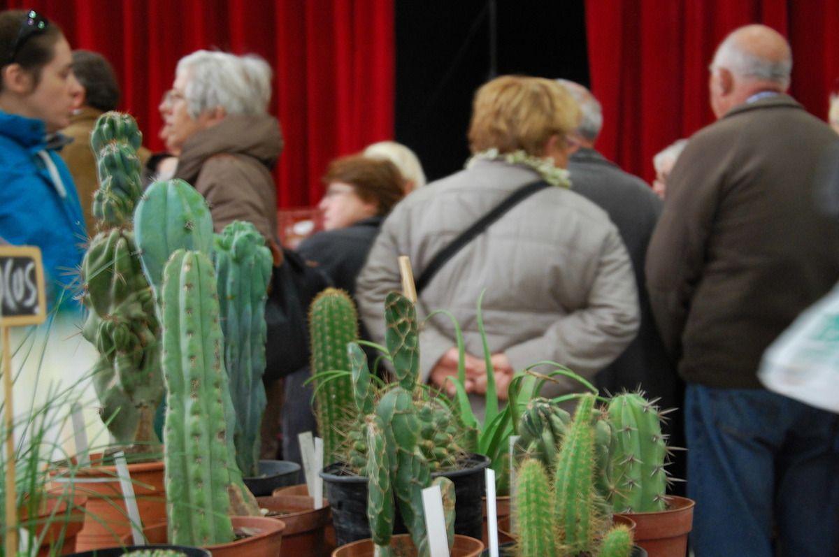 Des plantes et autres cactus.