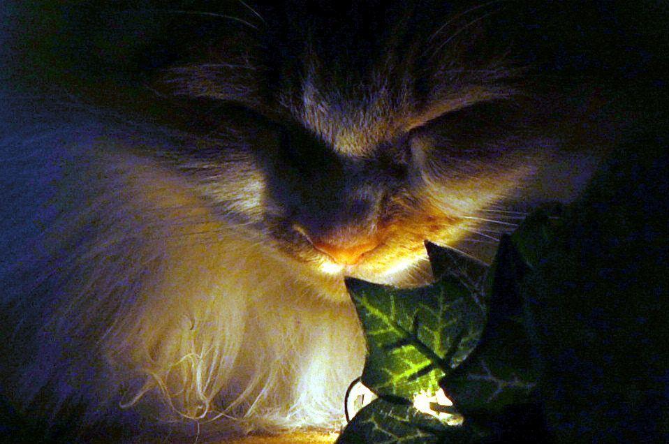 La photo bonus d'hier dort ma Chachourite et chat chez trop beau , trop tendre ....
