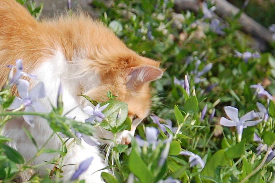 Un champ de fleurs pour Chachourite.
