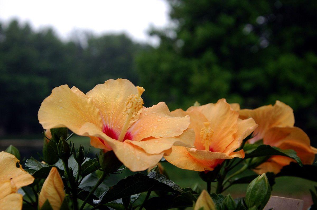 Des fleurs magnifiques aux perles de pluie.