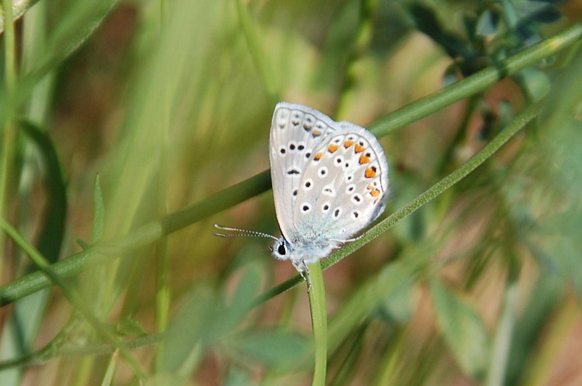 Un autre papillon.