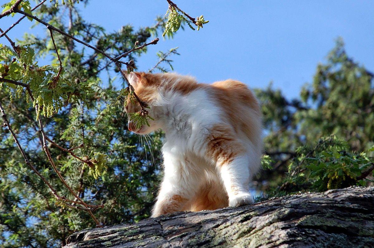 C'est dit Chat va descendre par l'arbre.