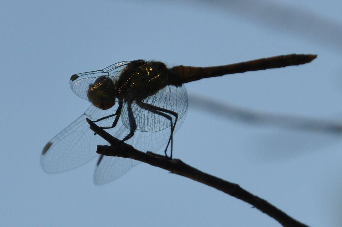 Une libellule, c'est que la nature est belle et généreuse ici.