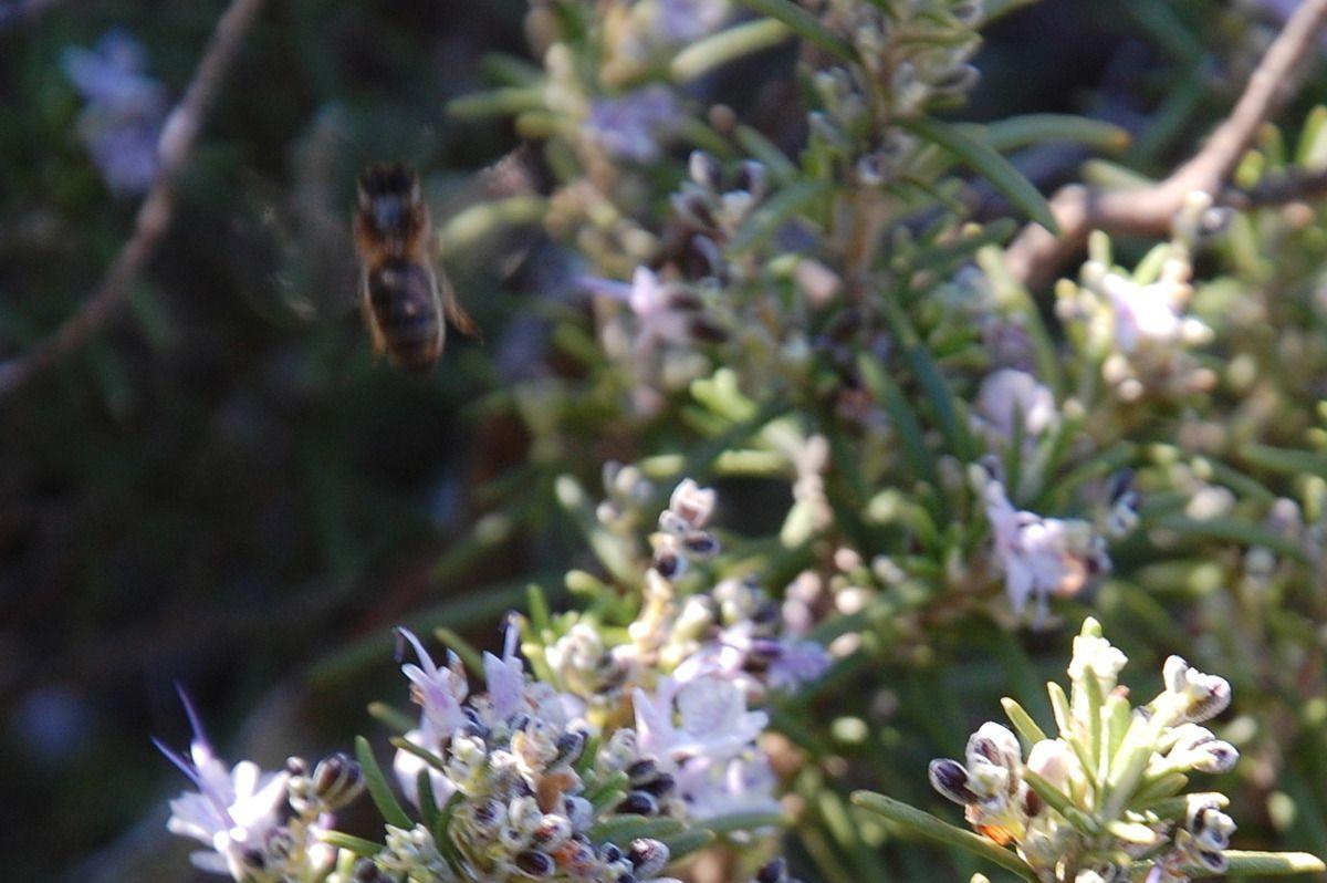 Dans la boite l'abeille.