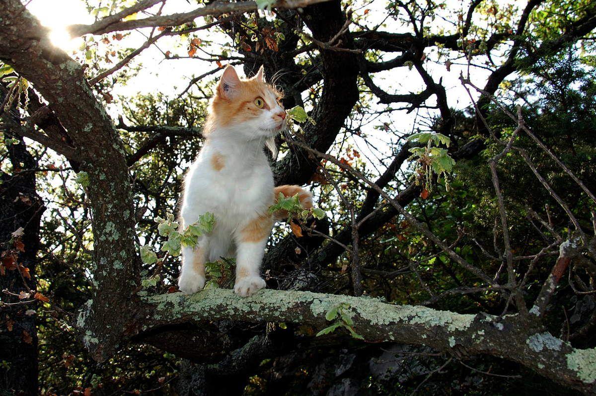 Très belle sur sa branche.