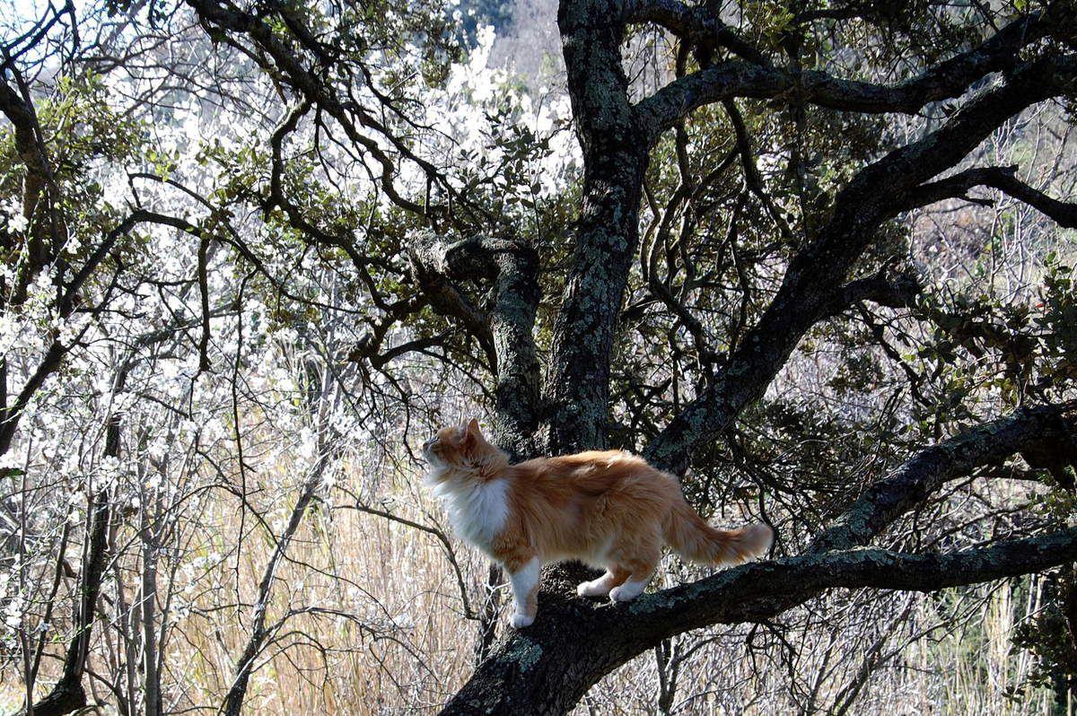 Très belle sur son arbre