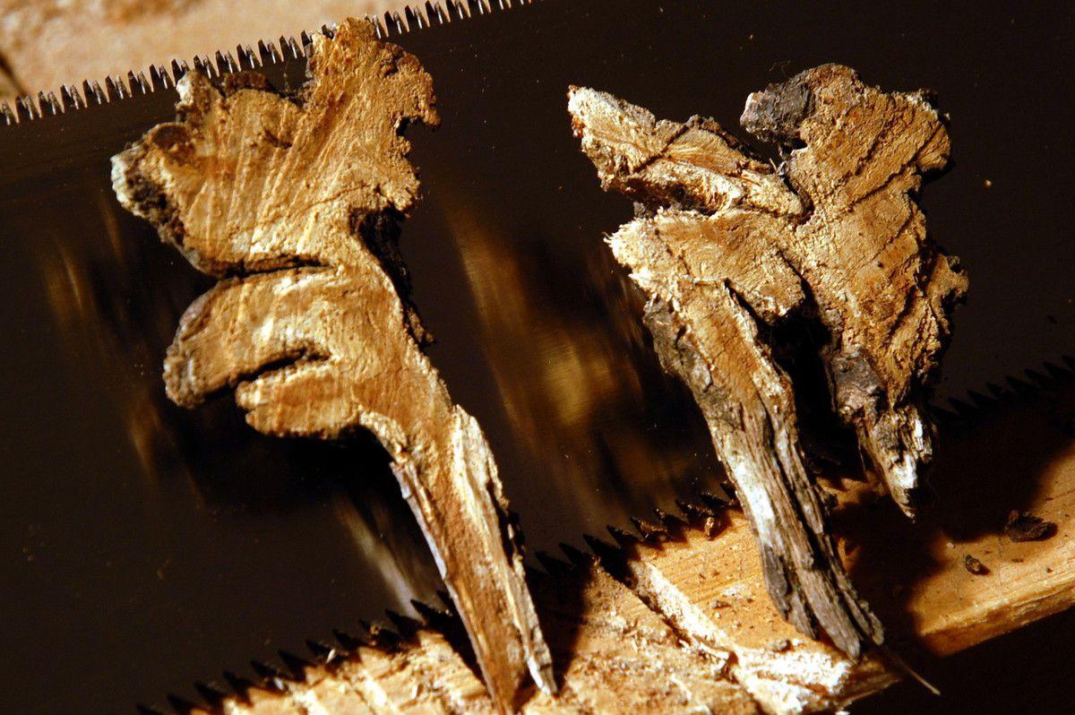 En gros plan le bois de ronce.