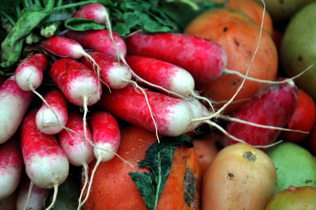 Des fruits et légumes de producteur.