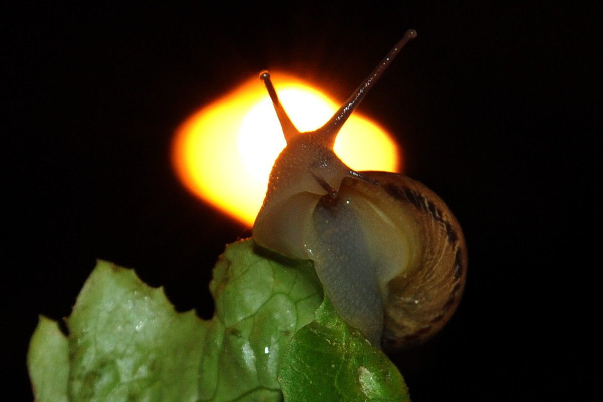 Les saveurs artistiques pour commencer. C'est la fête des escargots car il pleut !