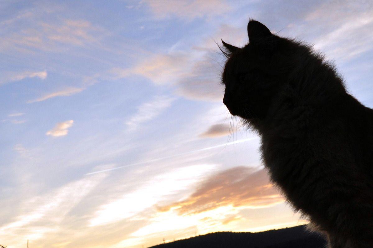 Mais qui est la vedette, chat ou ciel ?