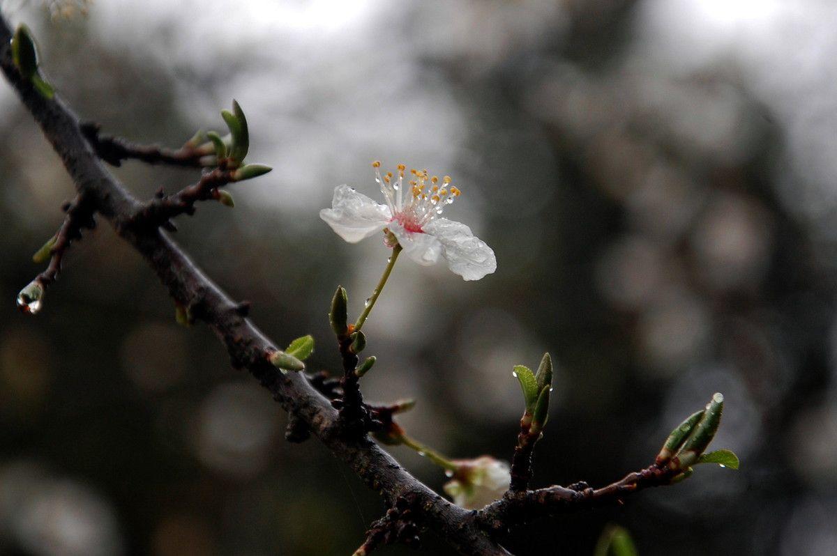 Un fleur après la pluie.