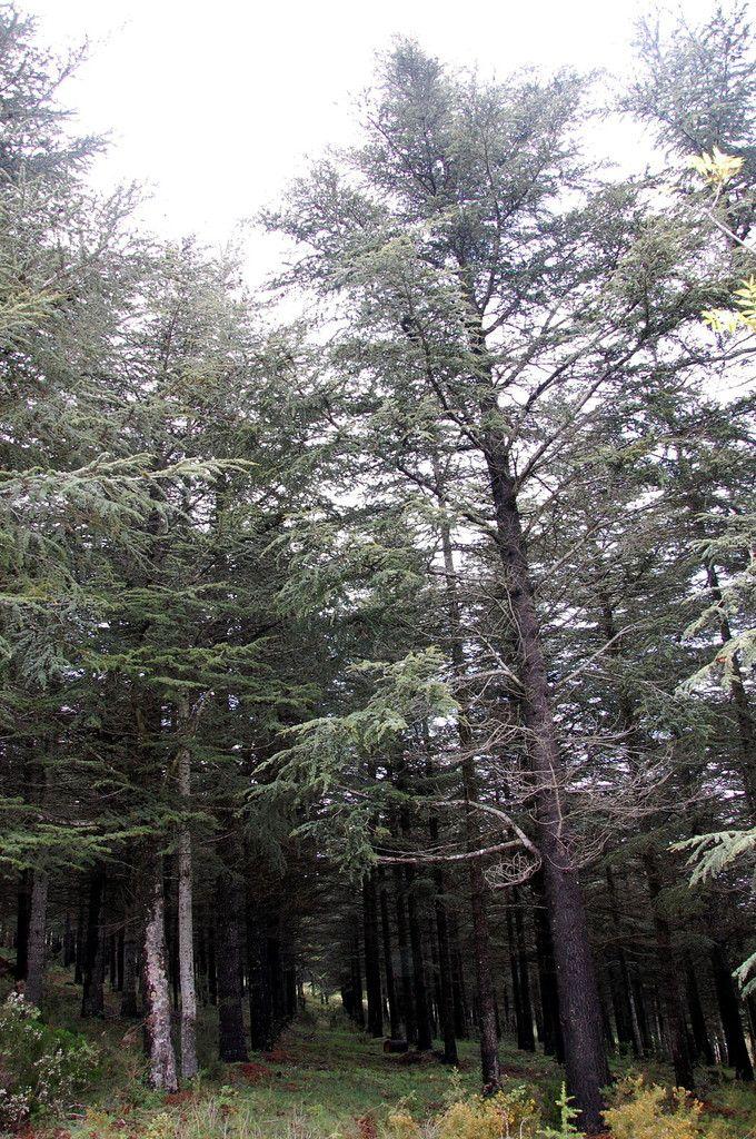 Voici une photo de la forêt.