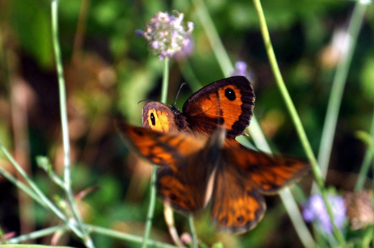 Bien pour la photo ces papillons.