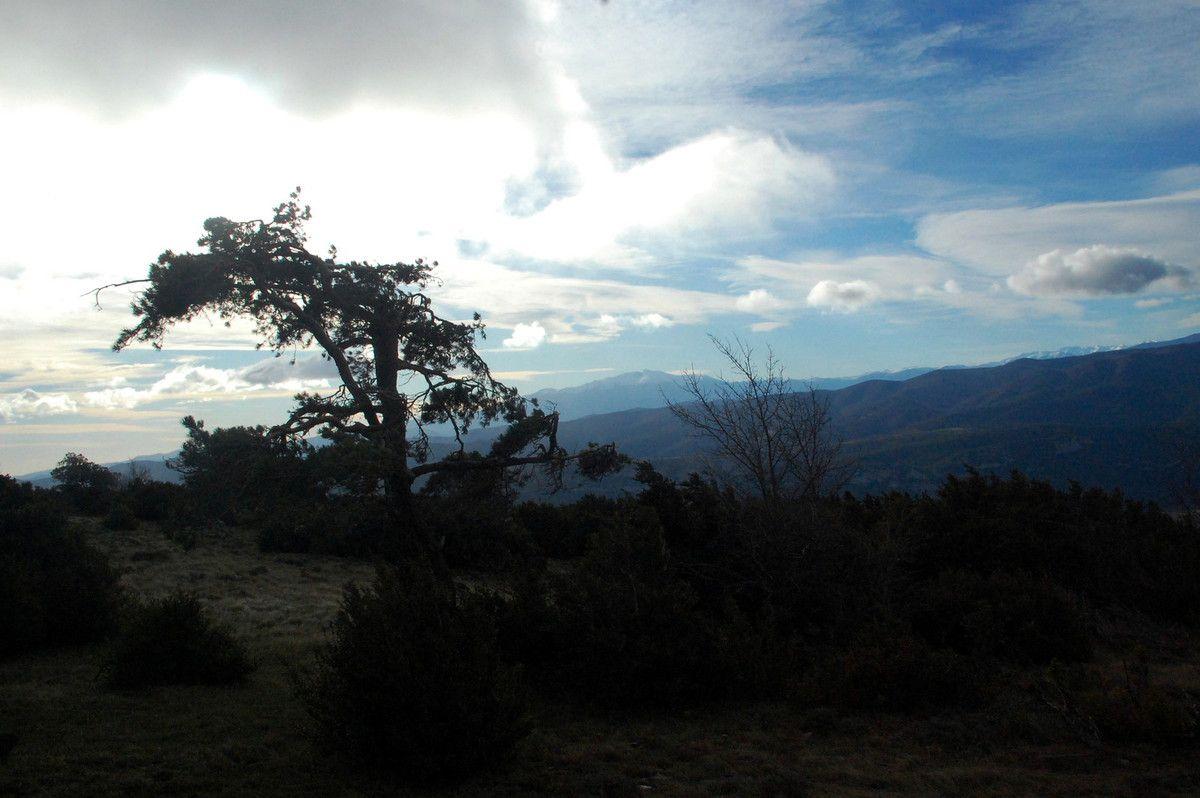 L'arbre et le ciel.