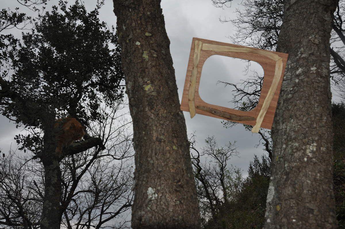 Voici le cadre entre deux troncs, et un rouquin aussi.