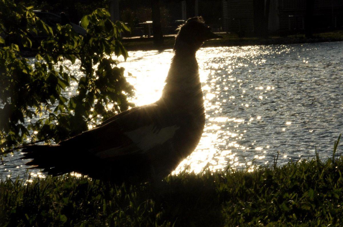 Les carresses du soleil sur les plumes, agréable ?
