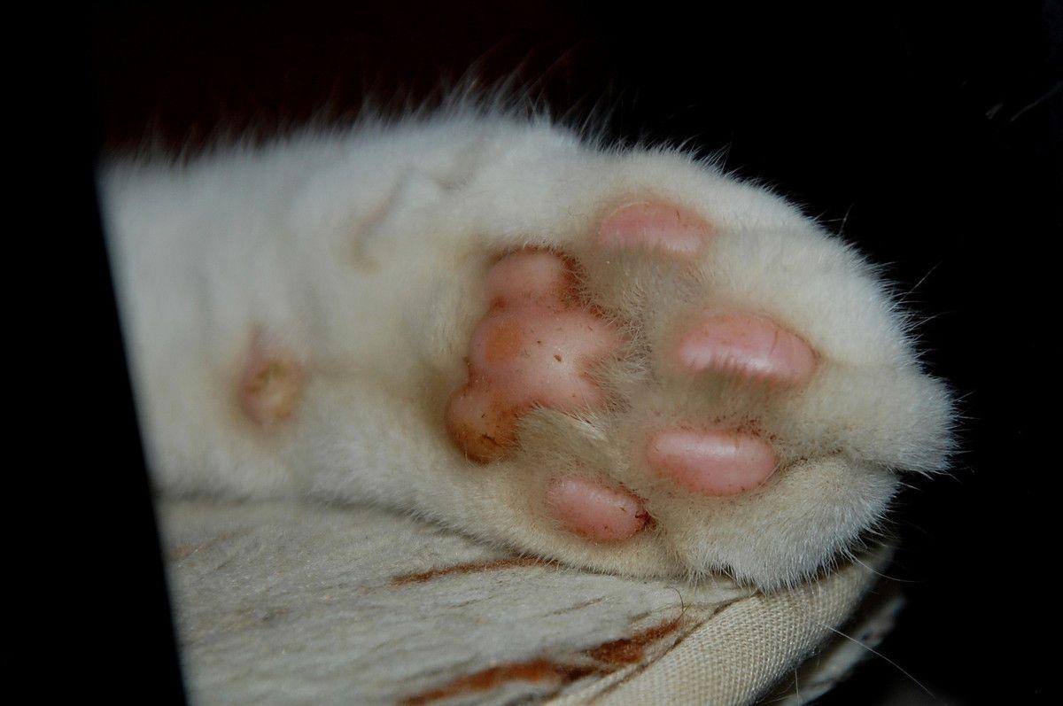 La patte du chat, à ma patte