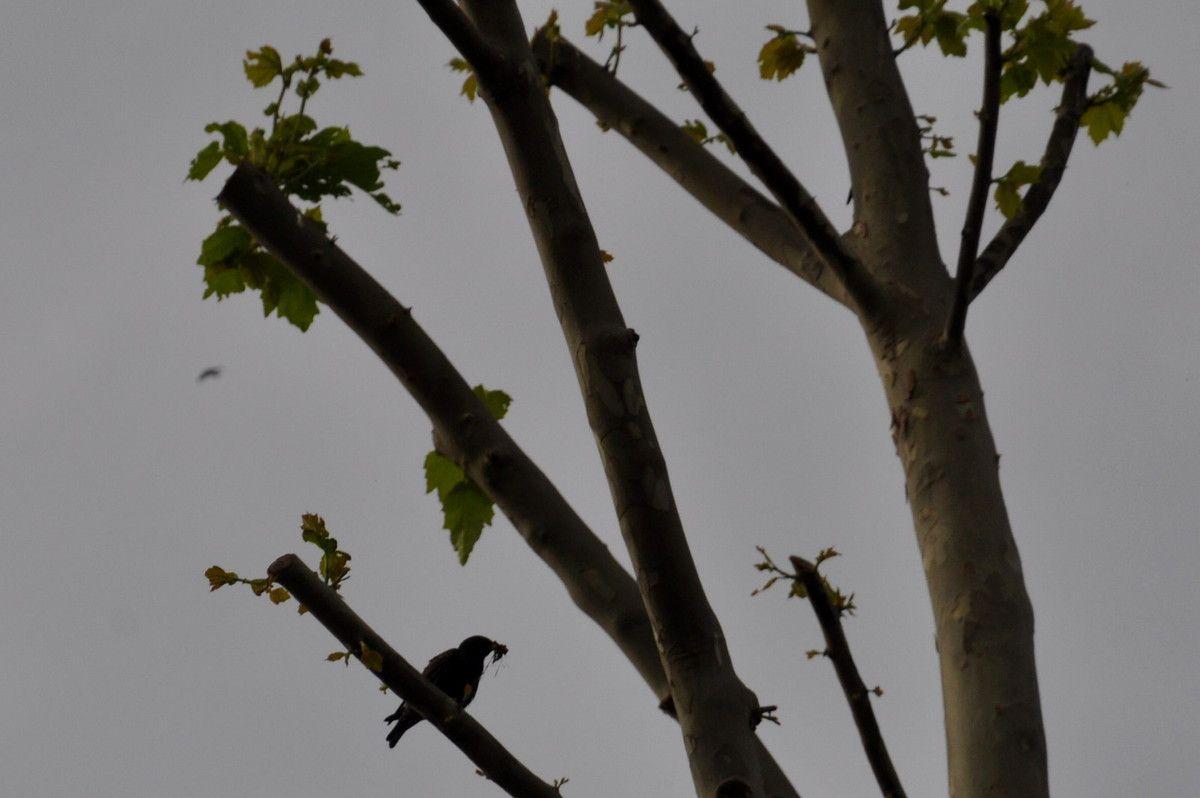 Les oiseaux et le repas des petits