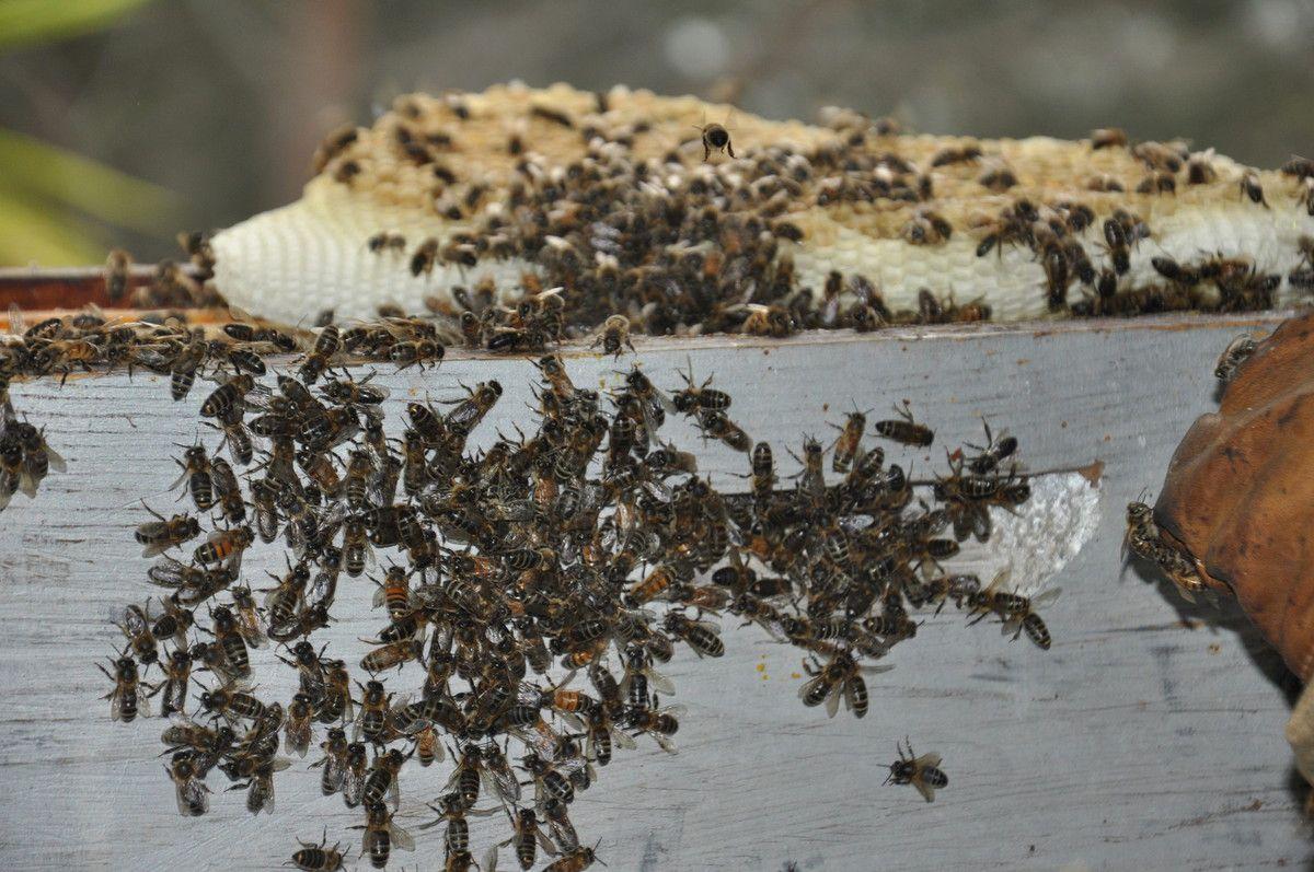 Sur la ruche