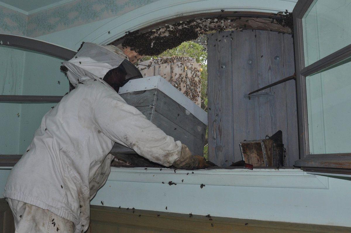 Mise en place de la ruche pour les deux jours qui suivent.
