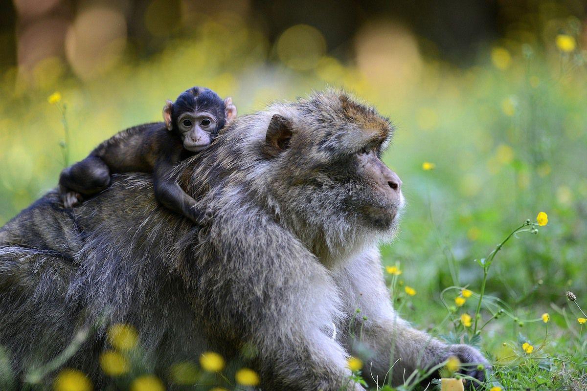 Heureux évènements dans les parcs animaliers d'Alsace