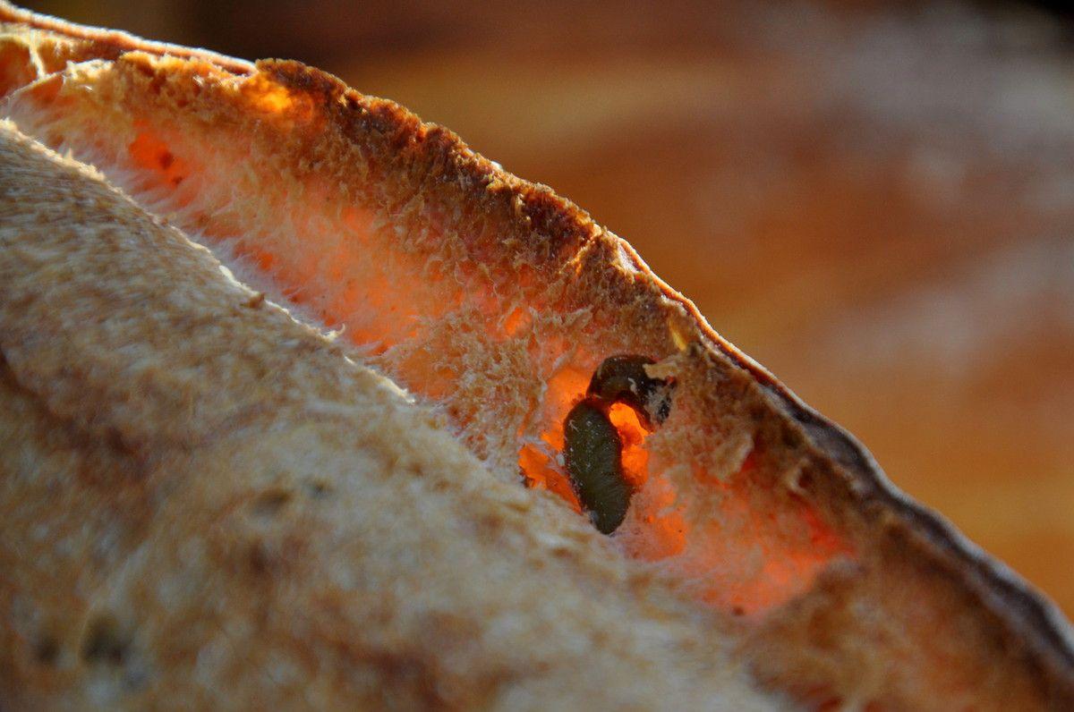 Le pain à la figue pour ici.