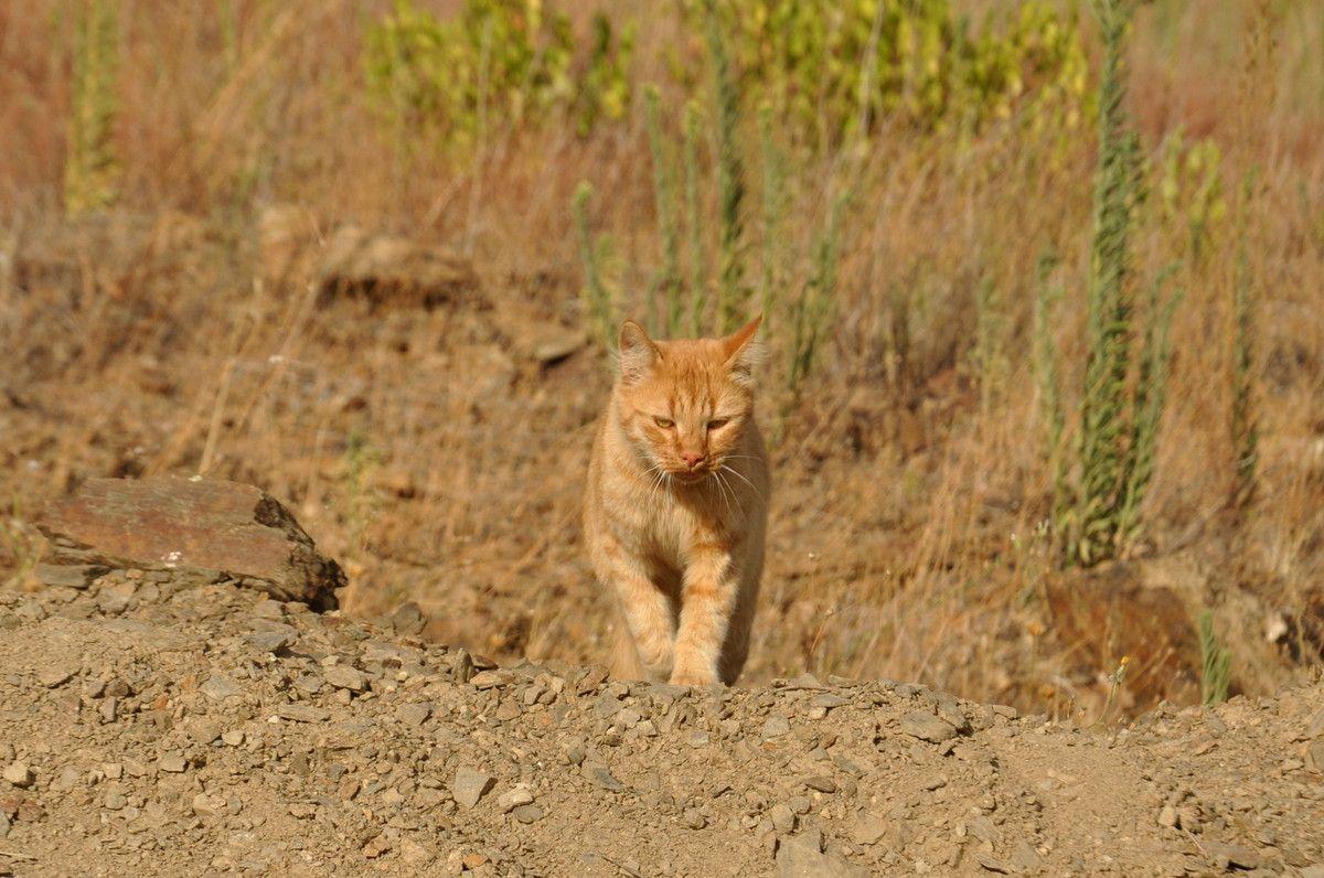 Mon assistant arrive, c'est dire que je suis près du village.