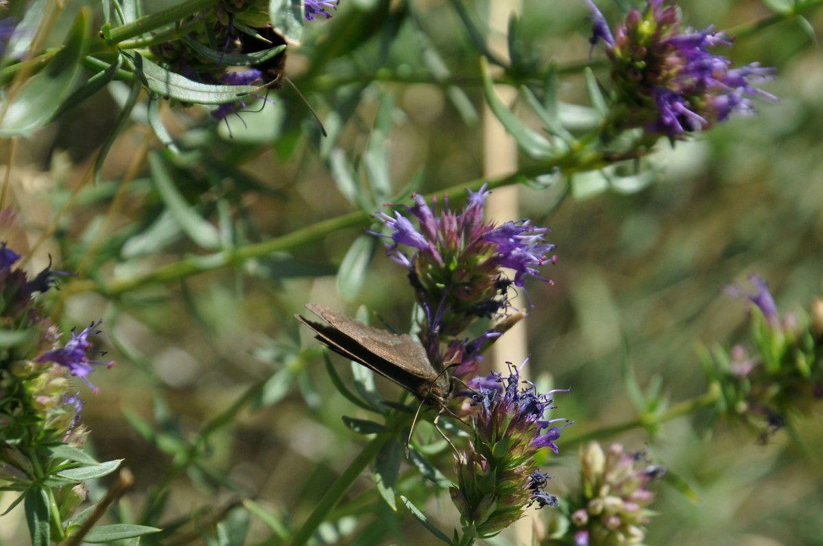 Des papillons ils sont nombreux.