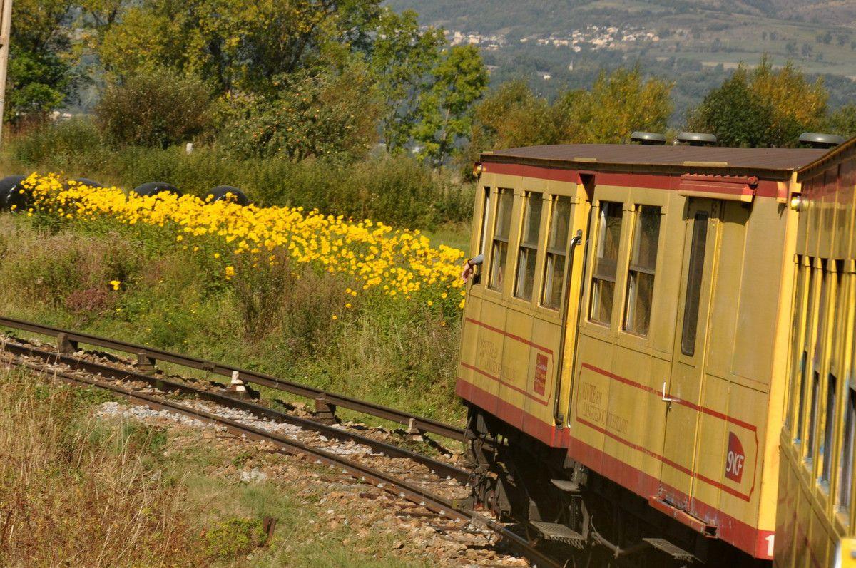 Fleurs jaunes comme le train.