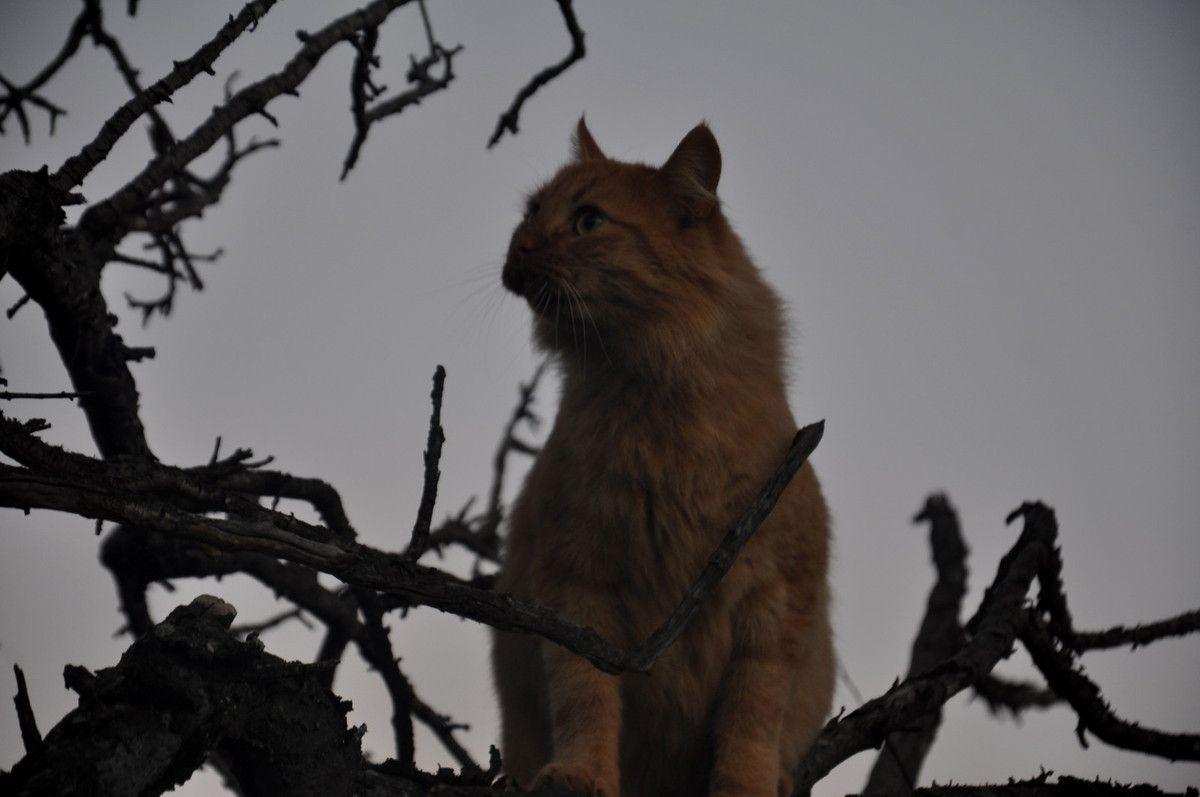 Page plaisir chat va voir si la lune arrive le plus haut dans l'arbre. Un bon assistant.