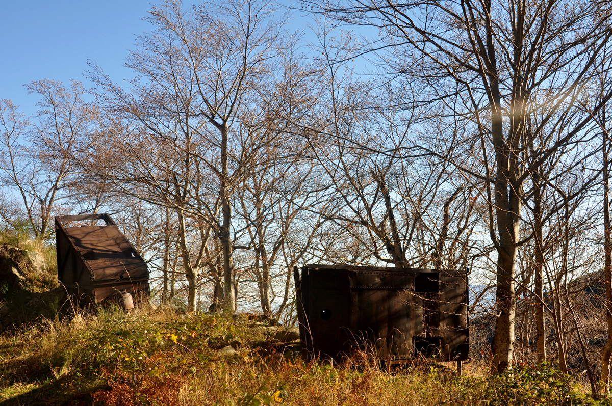 Histoire du fer et maintenant les arbres sont grands.