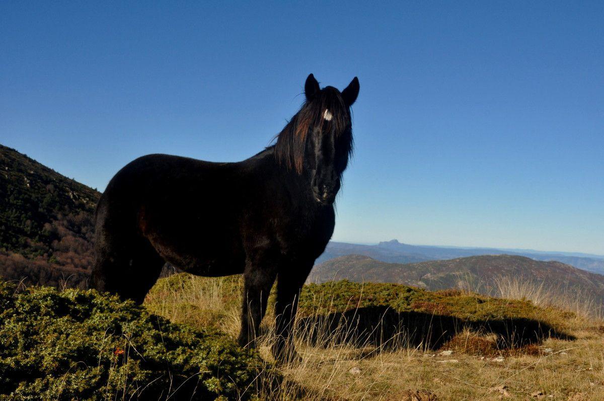 Cheval noir sur ciel bleu.